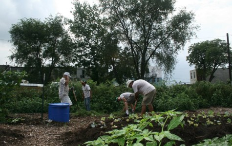 Volunteers prep a Camden community garden built by the CCGC for harvest.