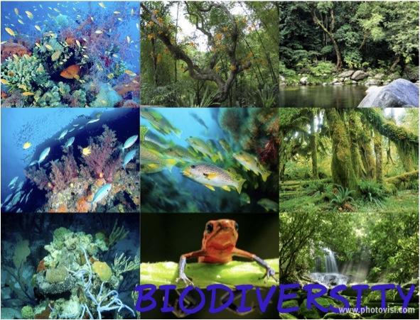 Preserve Biodiversity