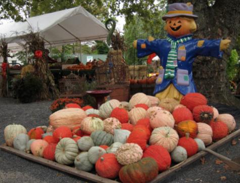 Cherry Hill guarantees a Happy Halloween