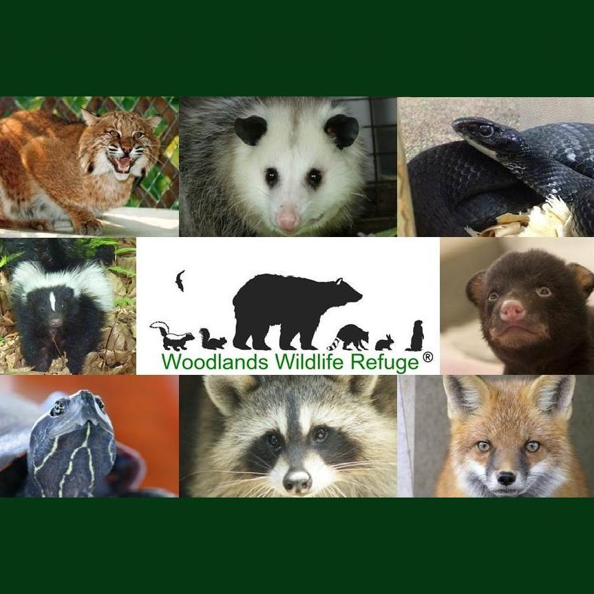 Woodlands Wildlife Refuge protects animal habitats
