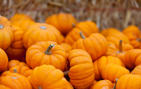 Pumpkin-lovers celebrate all-things pumpkin on October 26th.