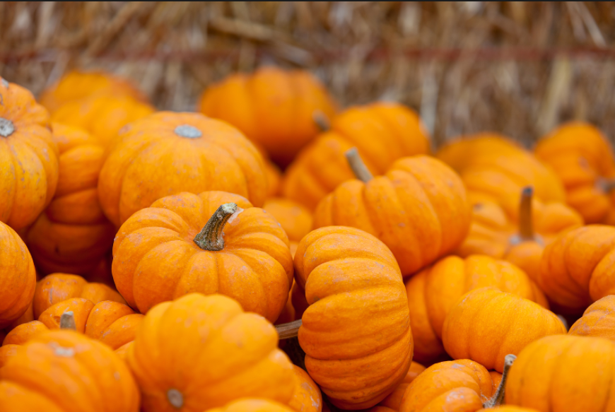 Pumpkin-lovers+celebrate+all-things+pumpkin+on+October+26th.+