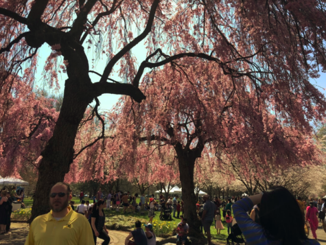 The Subaru Cherry Blossom Festival of Greater Philadelphia shares Japanese culture with visitors