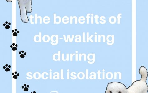 The benefits of dog-walking during social isolation