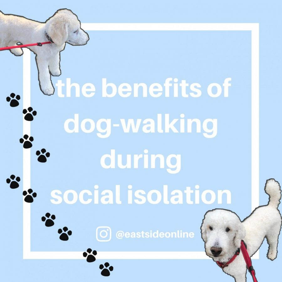 The+benefits+of+dog-walking+during+social+isolation