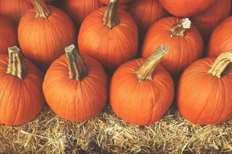 Pumpkin picking is one of the many fun fall activities
