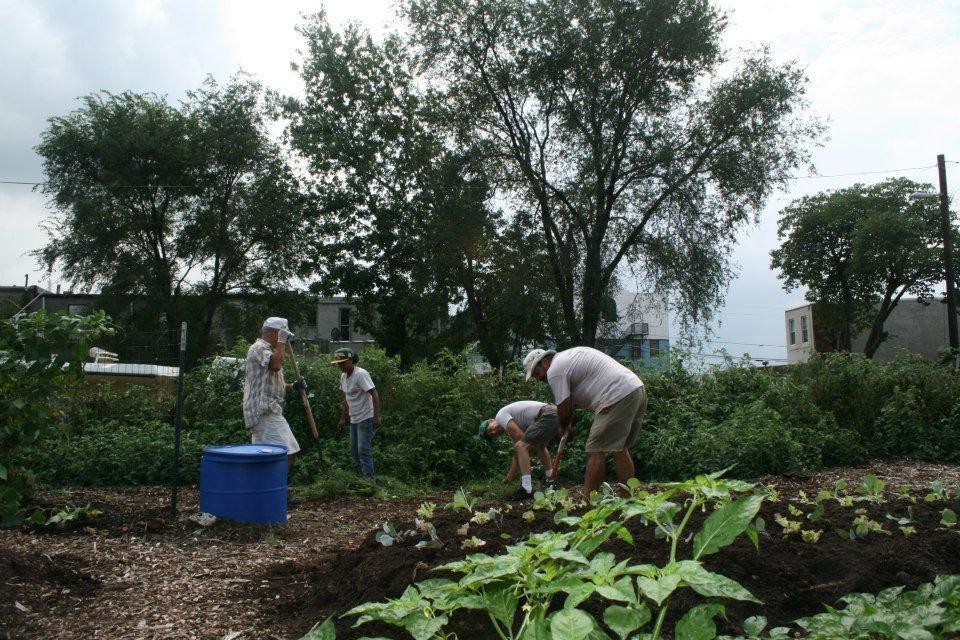 Volunteers prep a Camden community garden built by the CCGC for harvest.