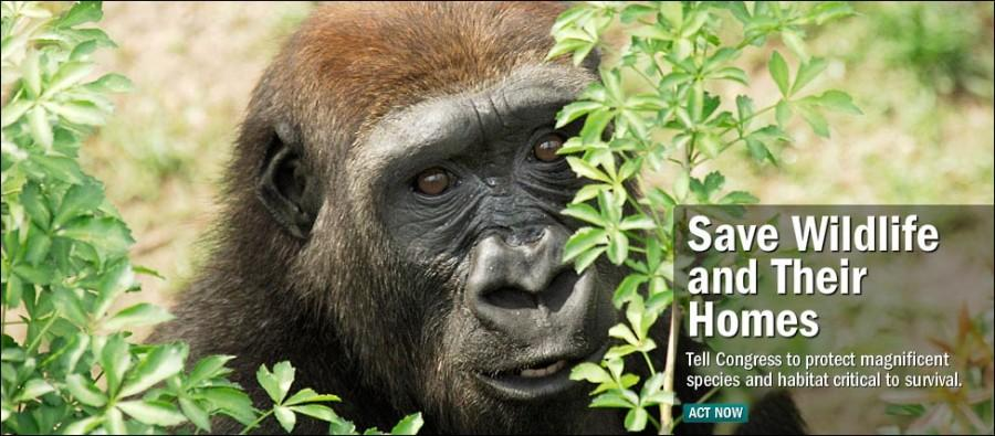 Conservation harms animals