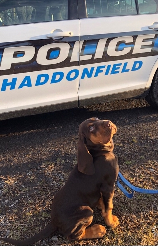 Meet+Blue%21+This+adorable+pup+is+the+newest+member+of+the+Haddonfield+Police+Department.