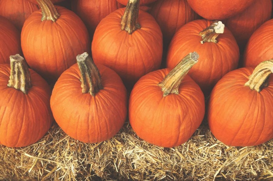 Pumpkin+picking+is+one+of+the+many+fun+fall+activities