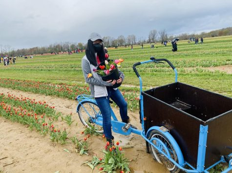 Experience the tulip picking event at Holland Ridge Farms.