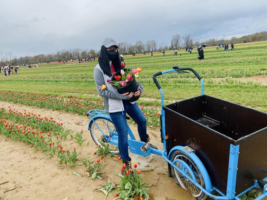 Experience+the+tulip+picking+event+at+Holland+Ridge+Farms.